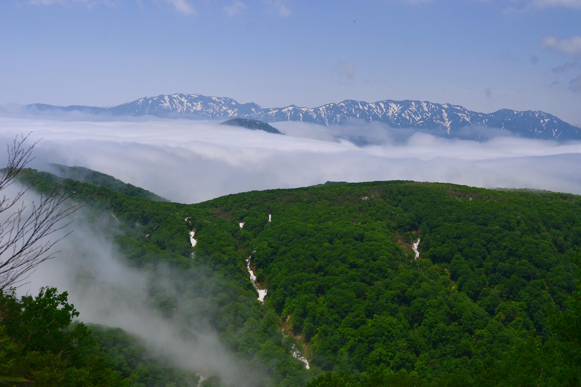 第4回山の日記念登山 ~深緑の白神山地ど真ん中!~
