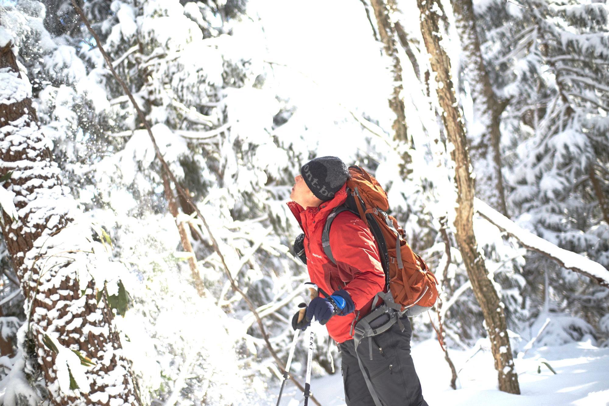 【キャンセル待ち】白神山地 雪山登山!白銀のブナ林